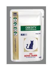 Obesity umido gatto